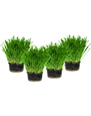 Cat Grass x 4 Pack (Grow your own kits)