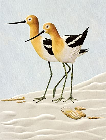 amazon com pumpernickel press boxed blank notecards avocets home