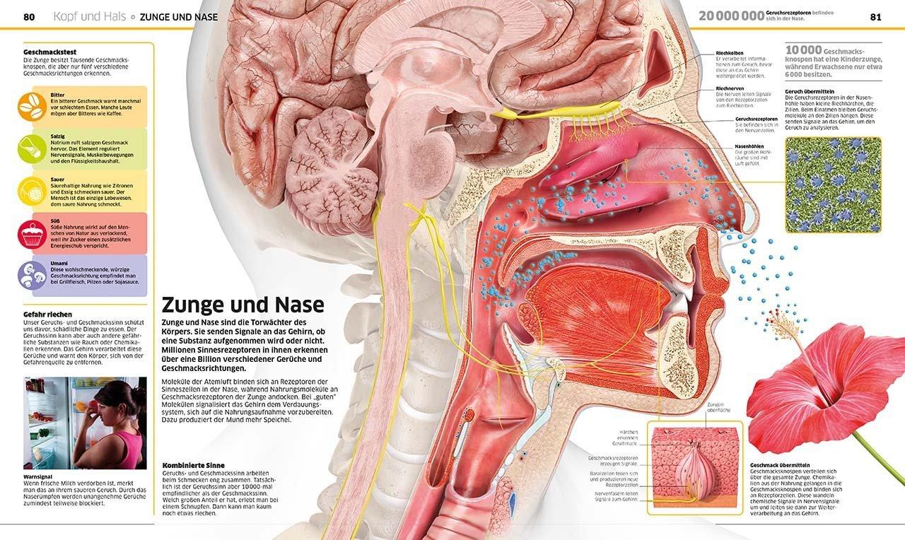 Wissen - Mensch: Der Körper in spektakulären Bildern + Kinder ...