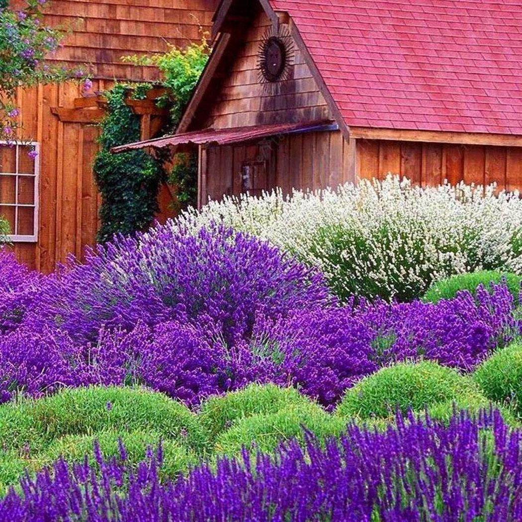 coorun assortimento di semi bio di piante/Verdure/fiori/Frutta per giardinaggio Confezione da 10/20/30/50/100/1200(22varietà)