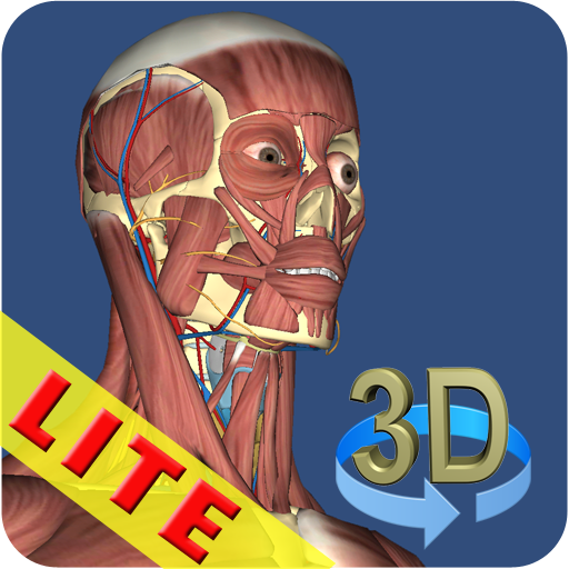 3D Anatomy Lite (Human Anatomy And Physiology Respiratory System Quiz)