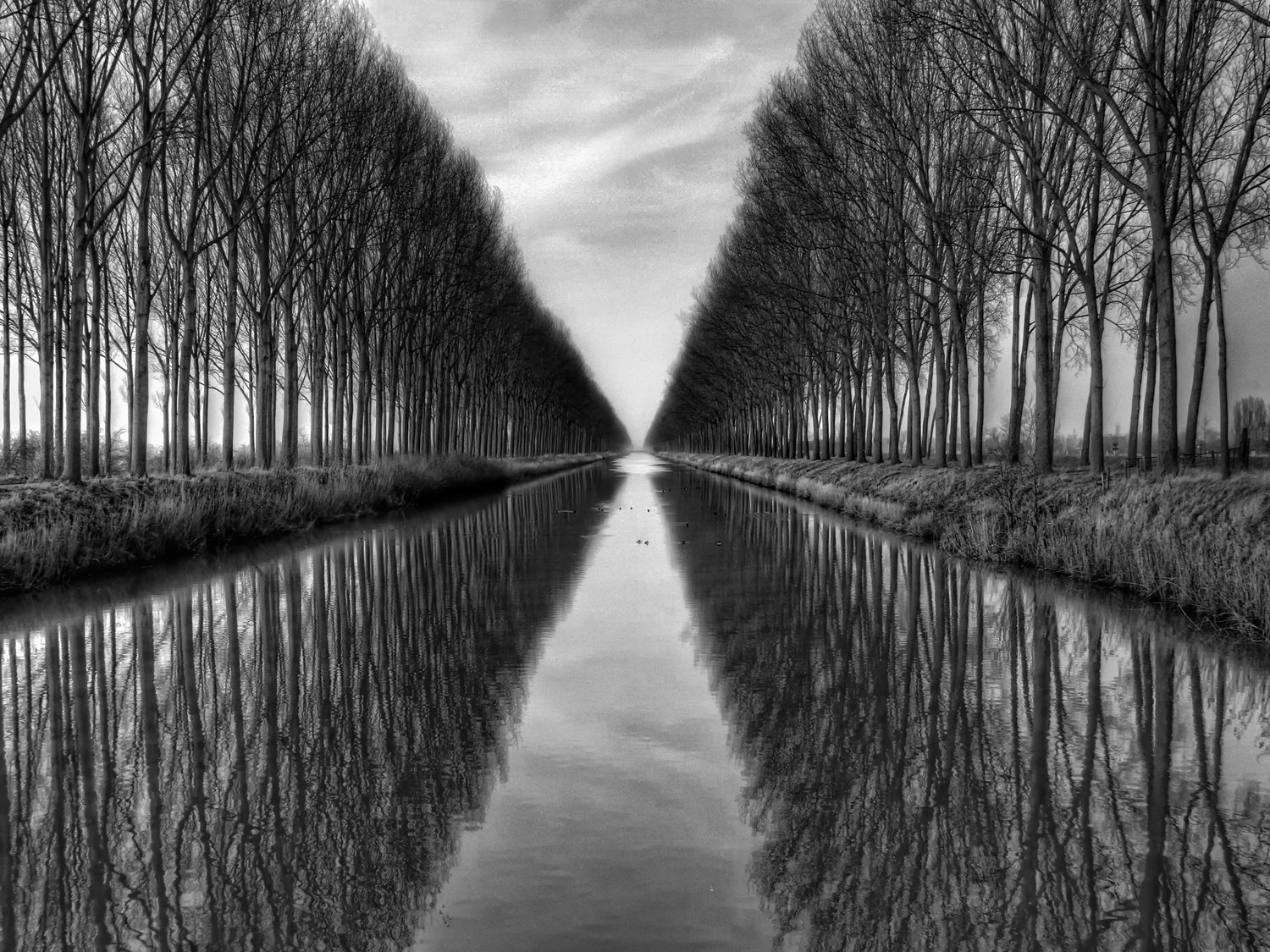 JP London Heavyweight Non Woven Art JPL and Yvette Depaepe Present Vanished to The Infinite Reflect Forest Path Black 36in x 48in Prepasted Fully Removable Wall Poster Mural PMURLT1X56473 36 x 48