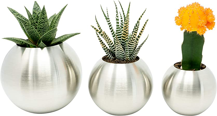 Cactus /& Plants Brushed Stainless Steel Planter Set– Indoor Pots for Succulents