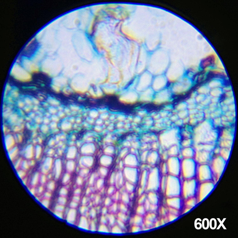 AmScope-Kids M30-ABS-KT1-W-I 120X-240X-300X-480X-600X-1200X 48pc Metal Arm & Base Educational Kids Biological Microscope Kit by AmScope (Image #4)