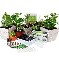 Medicinal & Herbal Tea Indoor Herb Garden Starter Kit | Basic Herb Seeds | 6 Non-GMO...