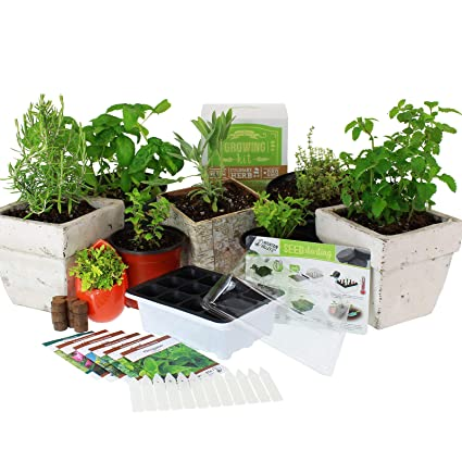 Superieur Culinary Indoor Herb Garden Starter Kit | Basic Herb Seeds | 6 Non GMO  Varieties