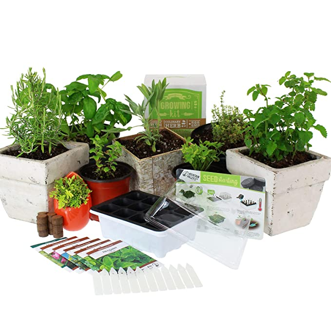 Culinary Indoor Herb Garden Starter Kit | Basic Herb Seeds | 6 Non-GMO Varieties | Grow Cooking Herbs & Spices | Seeds: Basil, Dill, Parsley, Chives, Mustard, Oregano best windowsill herb garden