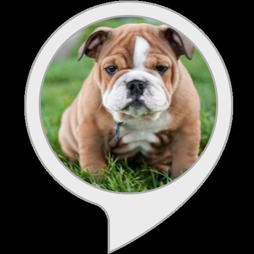 Best Dog Pets Bulldog ()