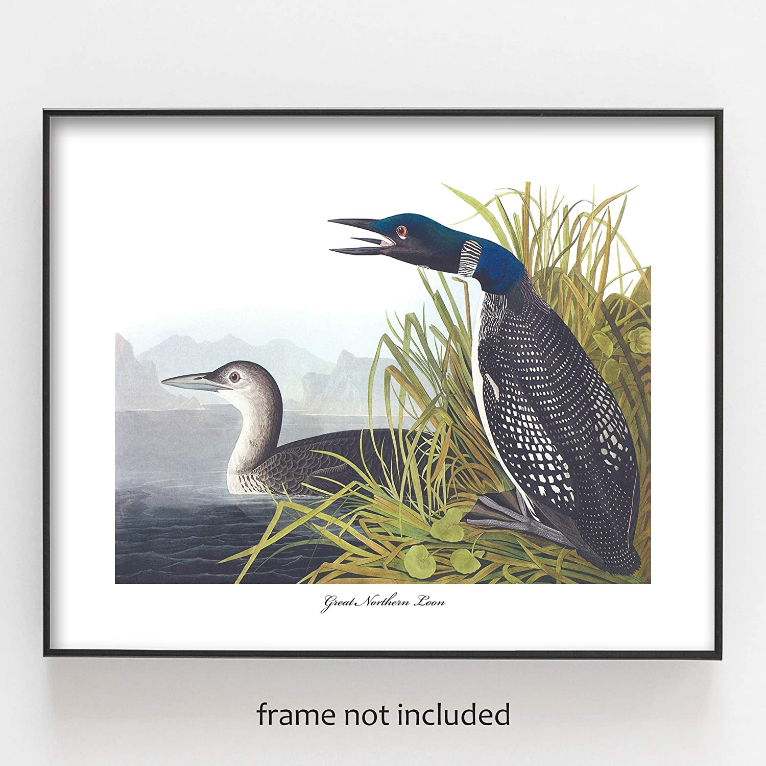 instant photo WILDLIFE Digital download photography 5 x 7 LOON Lake photo fine art home decor birds wall art nature PHOTOGRAPHY