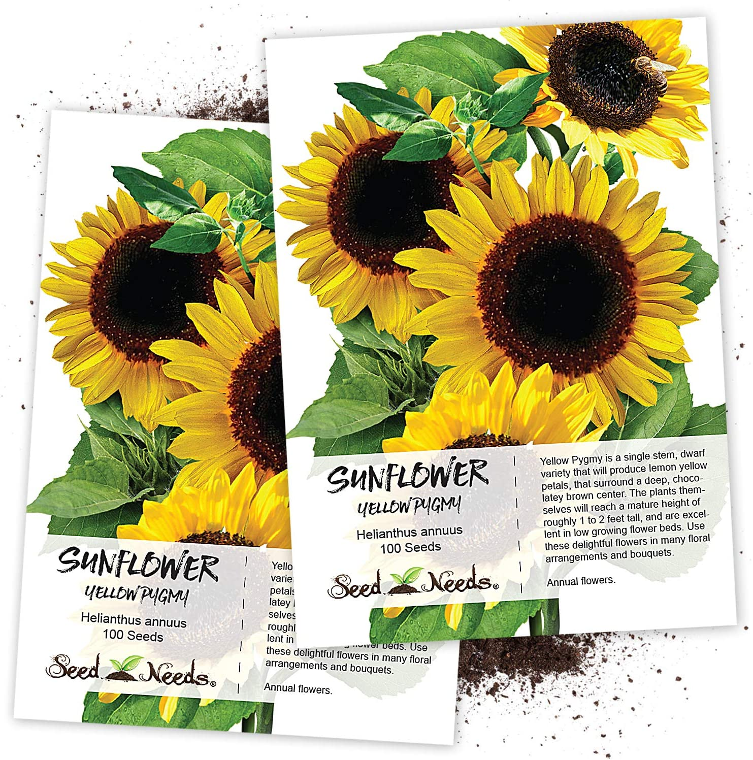Seed Needs, Yellow Pygmy Sunflower (Helianthus annuus) Twin Pack of 100 Seeds Each