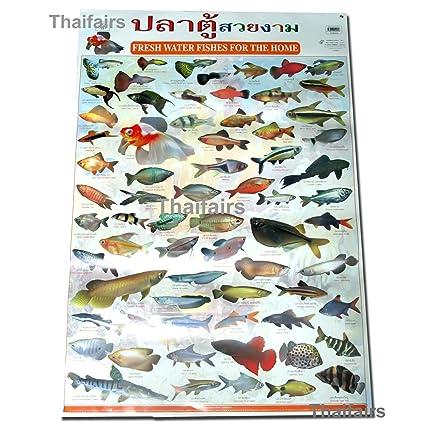 FRESH WATER FISHS POSTER AQUARIUM FISH POSTERS MORE THAN 60 BREED SPECIES