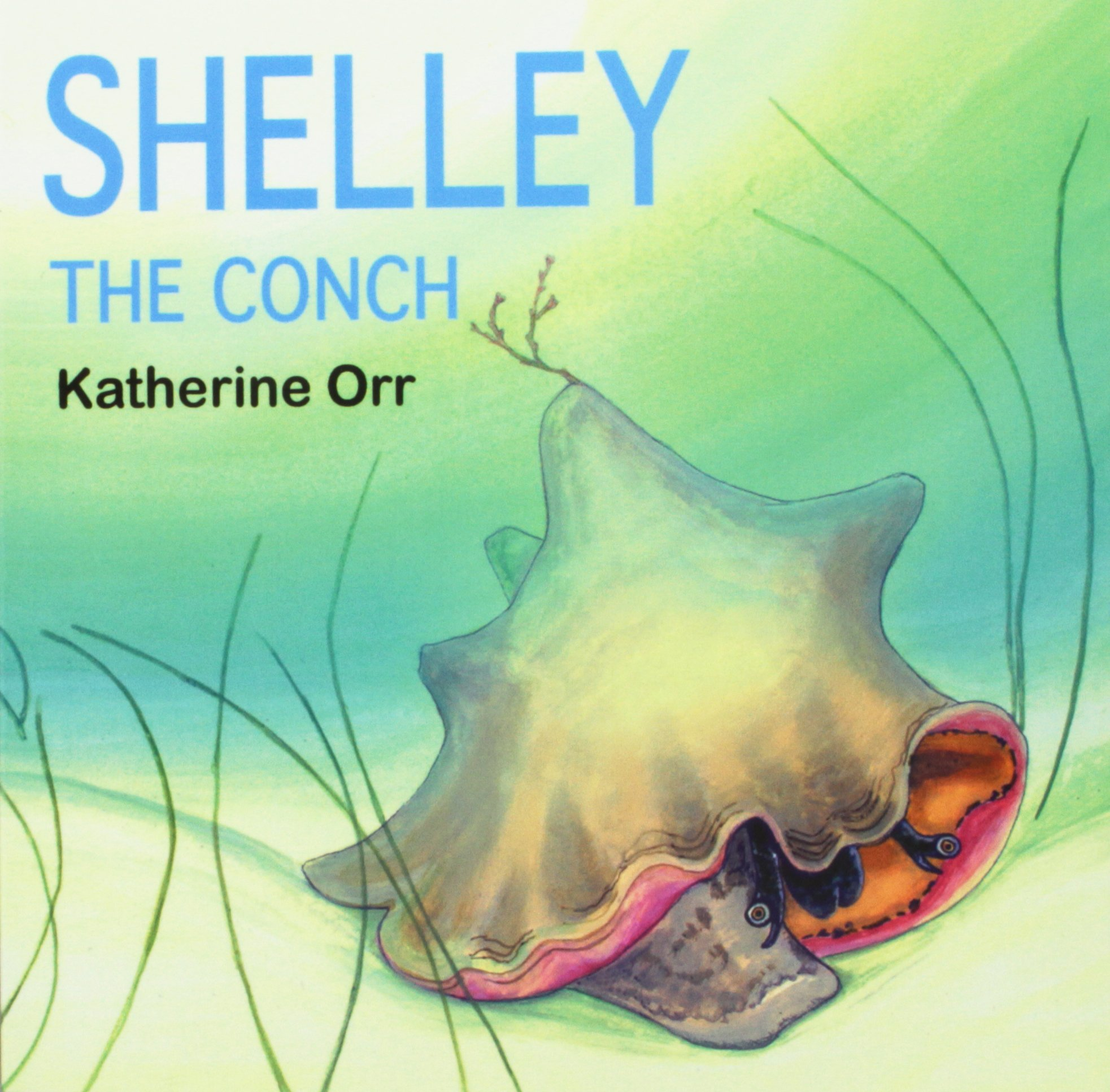 shelley-the-conch