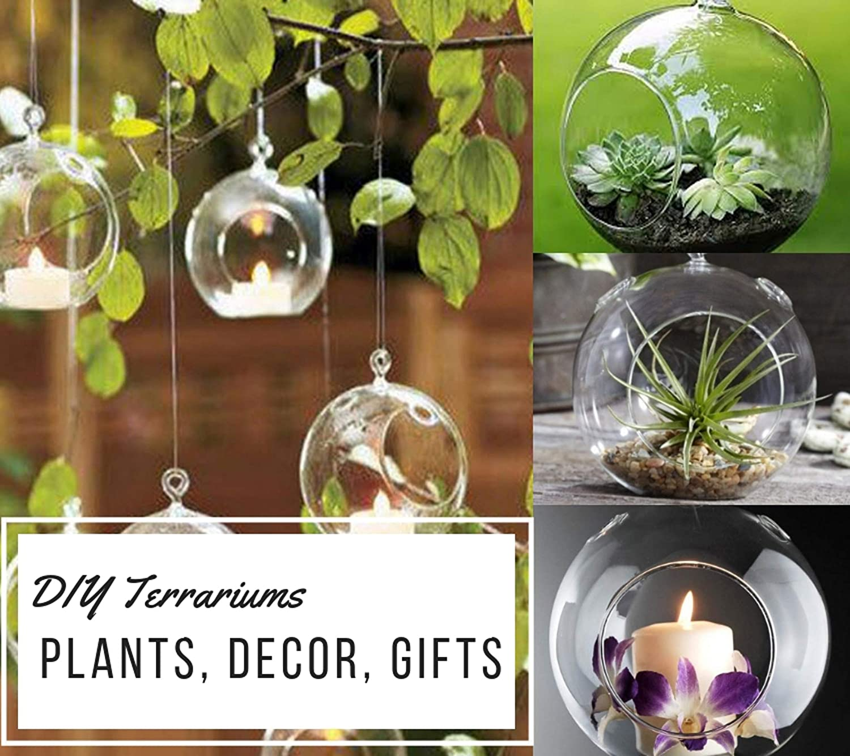 Amazon Com Set Of 6 Hanging Glass Globe Plant Terrariums Glass