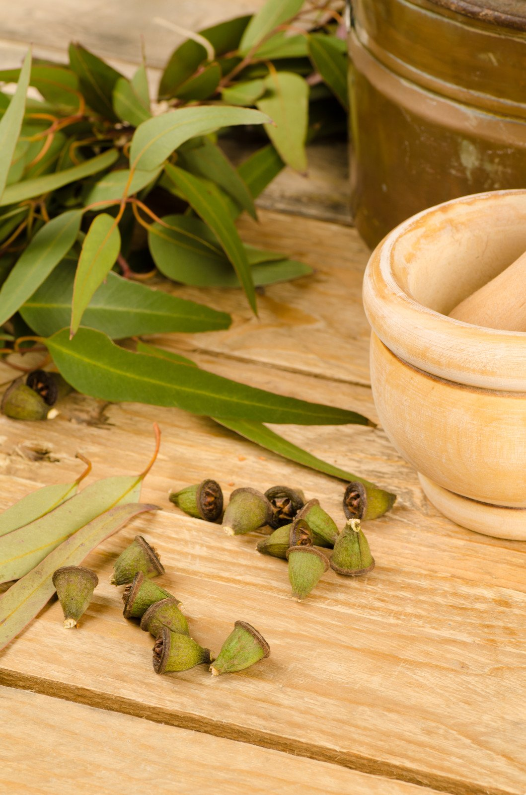 100% Pure Eucalyptus Globulus Essential Oil. Best for Aromatherapy, colds, chest rub, cough, congestion, sinus, cleaning, dust mites, joint & muscle pain, sauna & more. FREE ebook ''Benefits and Uses''