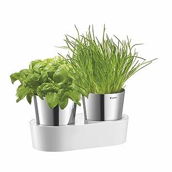 Auerhahn 2430142520 Lot De 2 Pots De Plantes Aromatiques