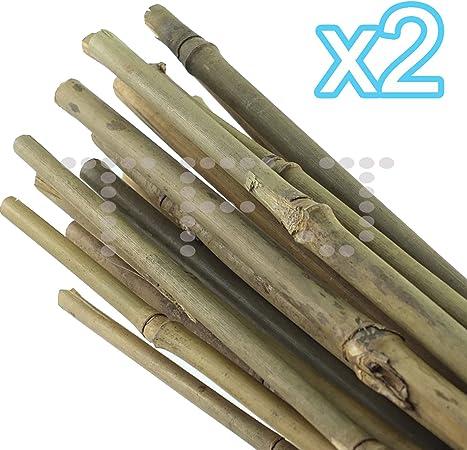 Cañas de bambú - las nuevas Ideas del jardín, Pack de 2: Amazon.es: Hogar