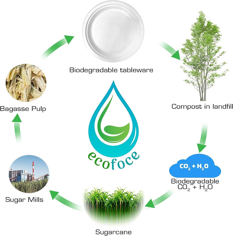 Platos biodegradables: Amazon.es: Hogar