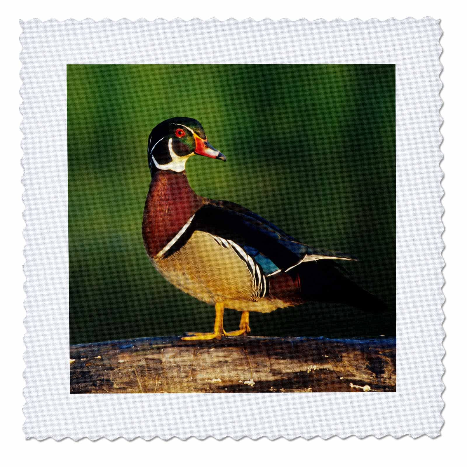 3dRose Wood Duck, Aix Sponsa, Male on Log in Wetland, Marion County, Illinois Quilt Square, 14 x 14