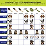 Coastal Pet Products DCPW6170 Safari Double-Sided