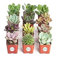 12 Shop Succulents Unique Collection of Live Succulent Plants