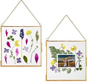 """Glass Frame for Pressed Flowers, Pictures, Cards and Artwork - Hanging Gold 6.3"""" Square Metal Picture Frames with Chain, Clear Floating Double Glass Wall Photo Display, Set of 2 Pressed Flower Frame"""