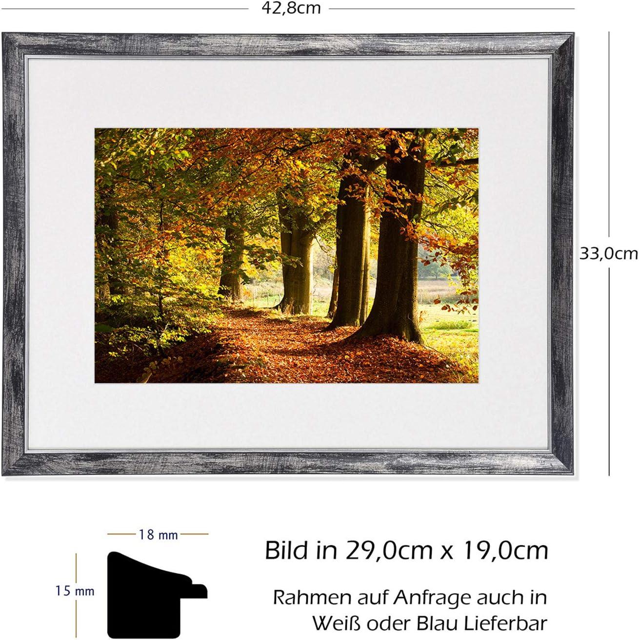 Wald Weg Natur Baum Sonne Laub Allee Kiefer Postereck 3516 Poster /& Leinwand