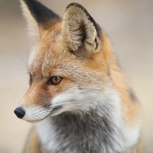 Dean Fox