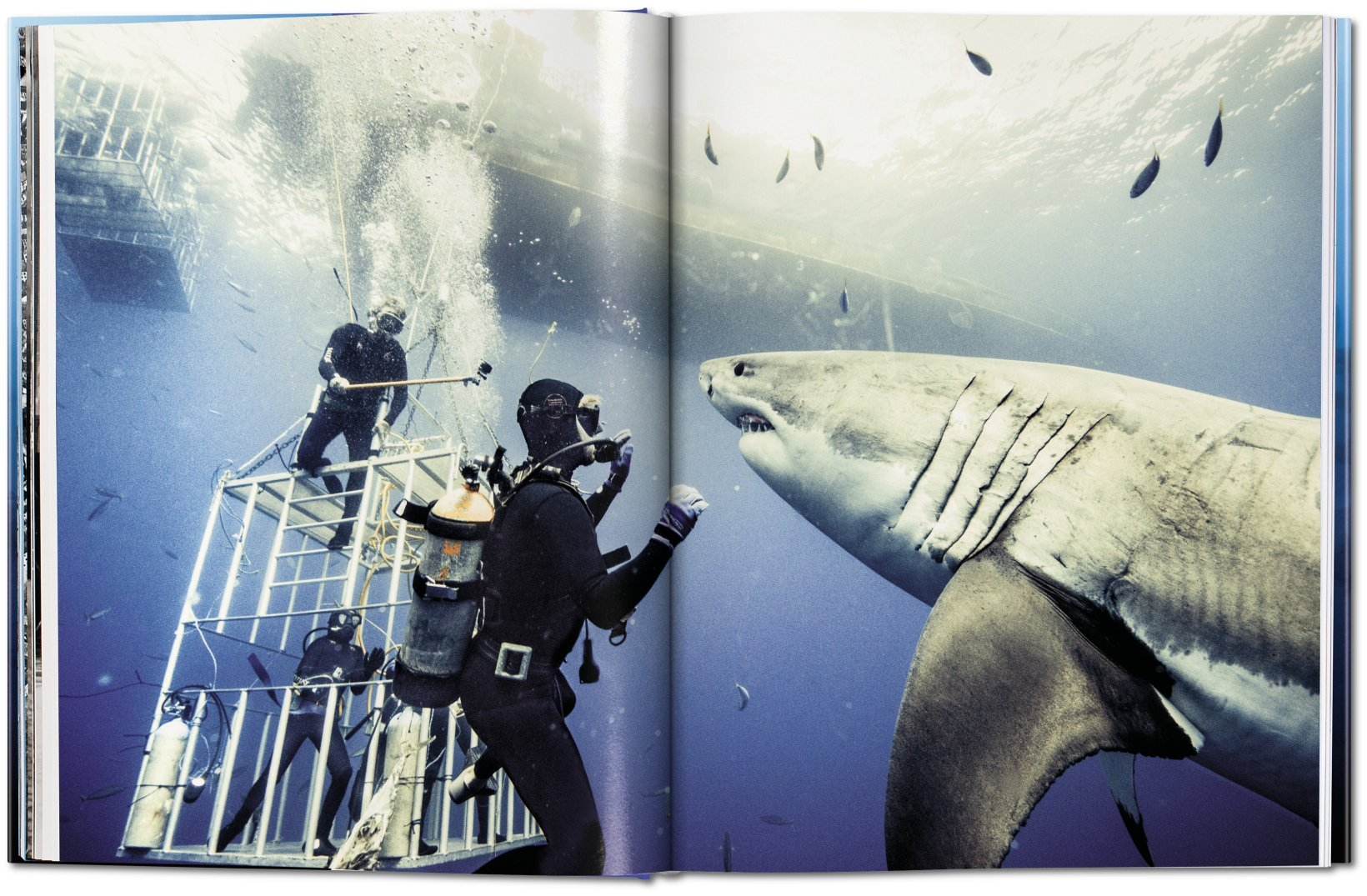 Michael Muller: Sharks, Face-to-Face with the Ocean\'s Endangered ...