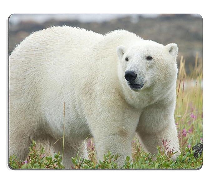 Mousepads canadiense oso polar caminando en el colorido Arctic ...