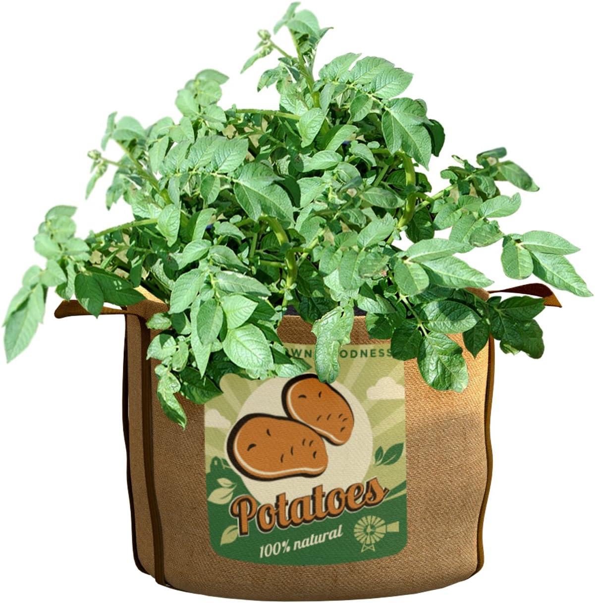 PANACEA PRODUCTS 30 gallon Grow Bag Potatoes - 84388