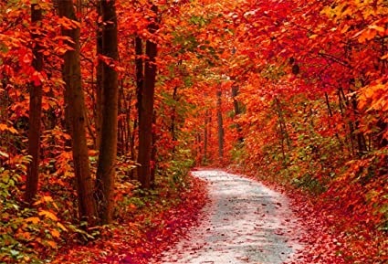 CSFOTO 5x3ft Background For Red Autumn Forest Pathway Beautiful Park Scenery Photography Backdrop Sunny Fall Leaf