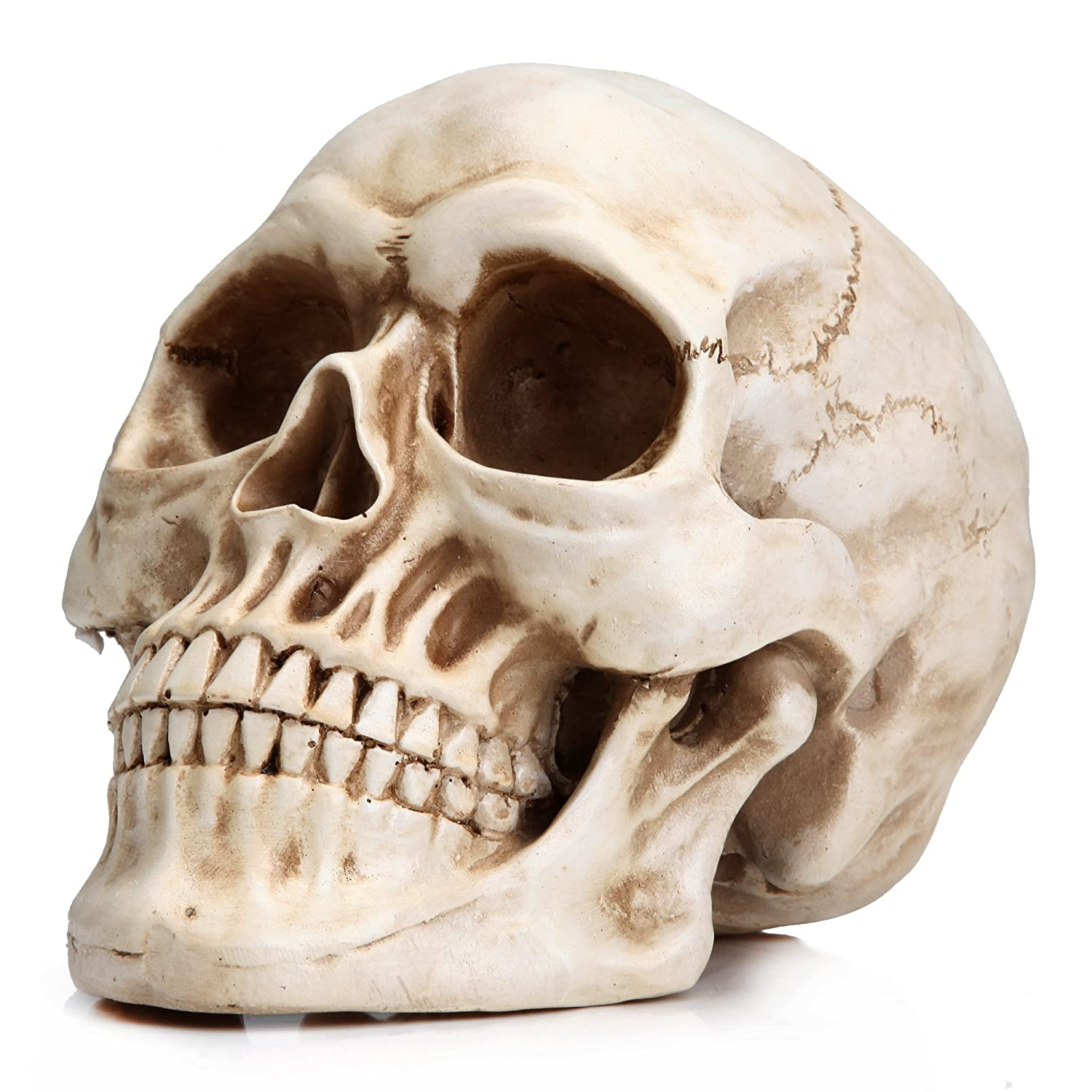 Readaeer life size replica realistic human skull head bone model readaeer life size replica realistic human skull head bone model amazon industrial scientific ccuart Images