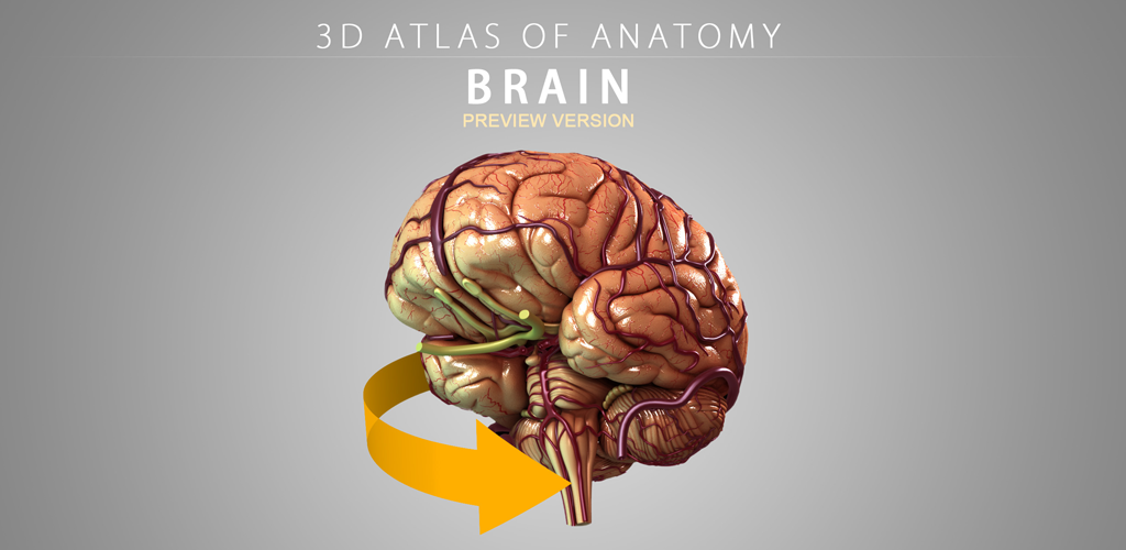 Amazon.com: Brain - 3D Atlas of Anatomy - Lite Version: Appstore for ...
