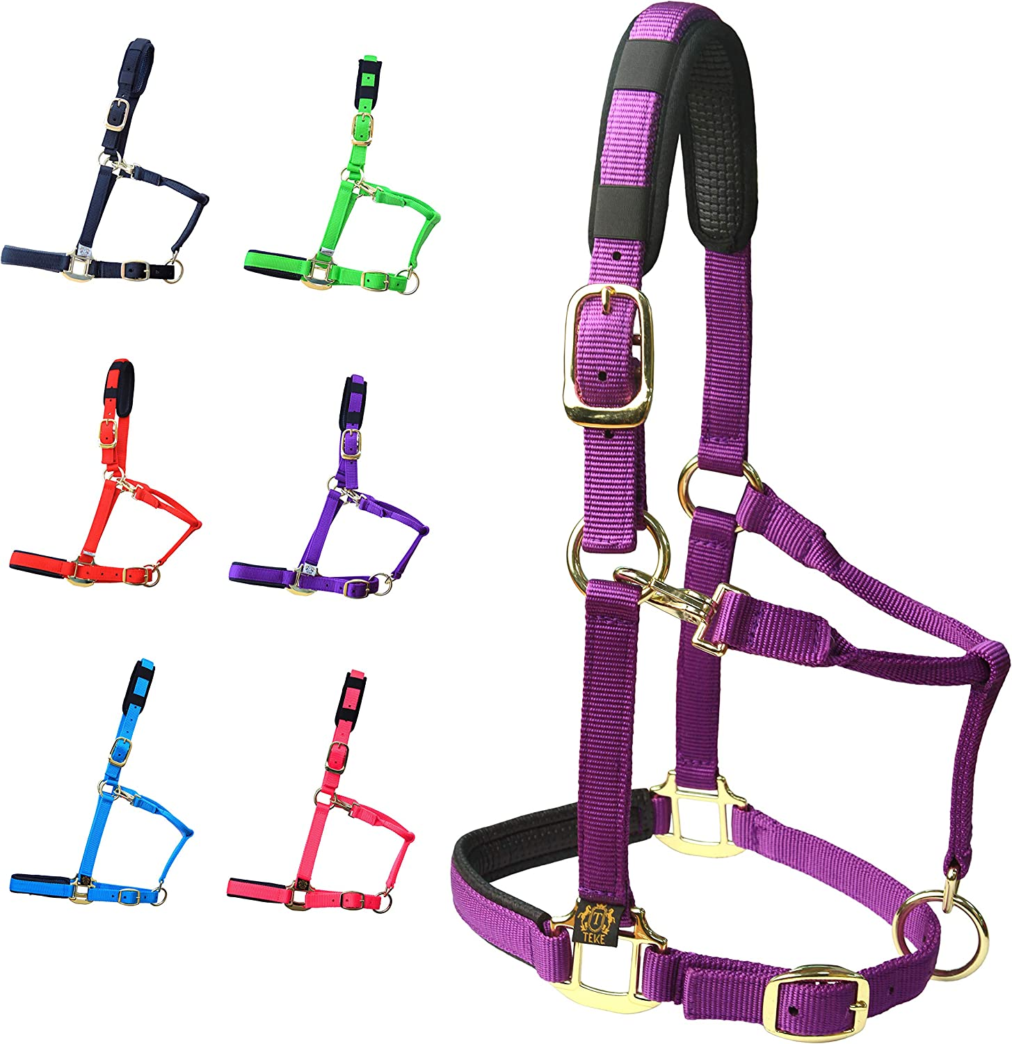 Horse Riding Gear for Beginners -