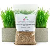 Organic Wheat grass Seeds, Cat Grass seeds, 16 ounces- 100% Organic NON GMO - Hard Red Wheat. Harvested in the US. Guaranteed to grow.