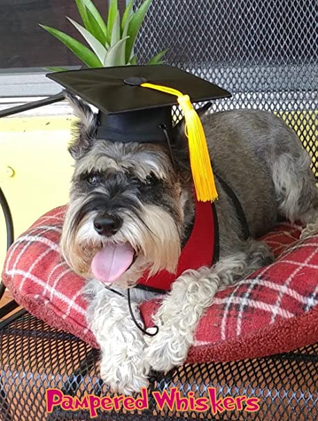 Pampered Whiskers The Graduate Black Graduation Cap For Dogs And Cats