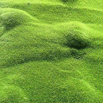 LEANO Moss Seeds, Ground Cover Evergreen Moose Lawn Moss Garden - Green Plant, Decorative Grass for Garden, Bonsai Bed/Meadow : Garden & Outdoor