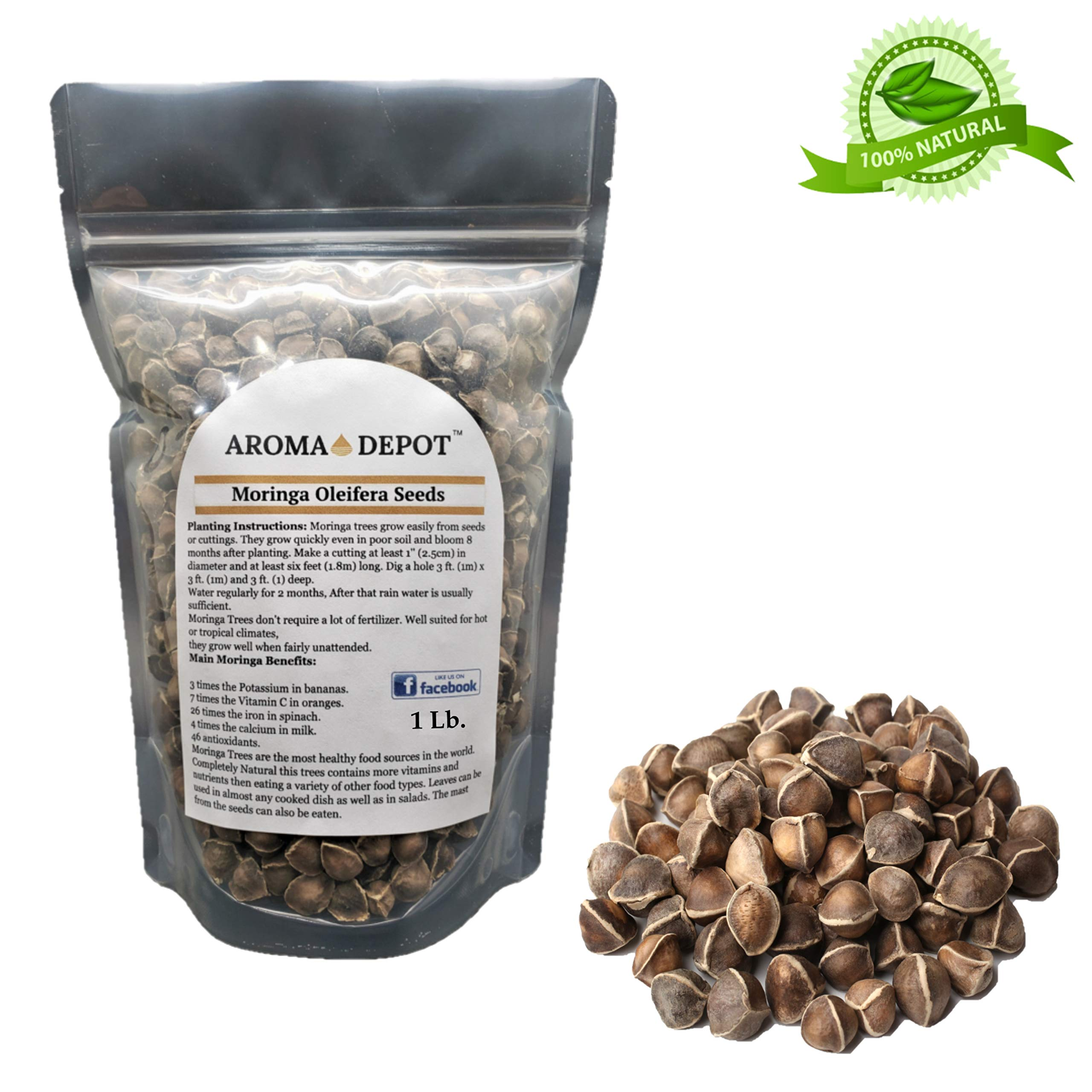 Aroma Depot 1lb / 16 oz Moringa Oleifera Seeds WINGLESS Organically Grown Sun-Dried, 100% Natural, Raw Superfood, Nutritional, Antioxidant & Anti Inflammatory Rich in Vitamins Edible Seeds, Protein by Aroma Depot (Image #1)