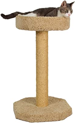 cat_scratching_post_with_a_bed