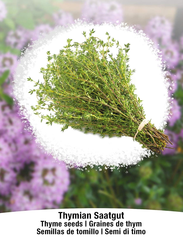 Semillas ecol/ógicas de plantas naturales//Interior /& Exterior BIO//ORGANICO Ajedrea de jard/ín /& Perejil