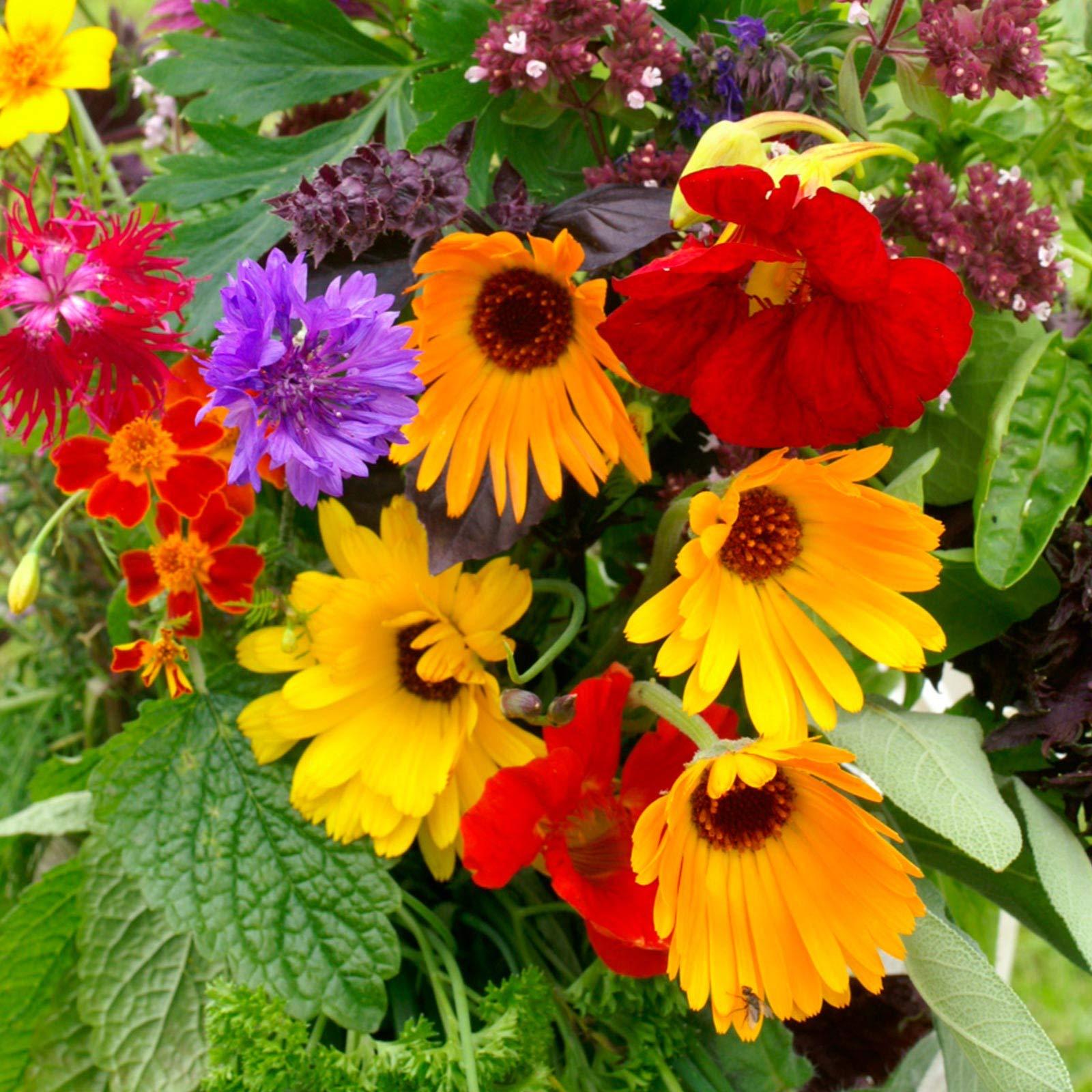 Edible Flower Garden Seed Mix - 1 Lb Bulk - Blend of Beautiful Flowers & Wildflowers: Lovage, Signet Marigold, Hyssop, Nasturtium, Spearmint & More