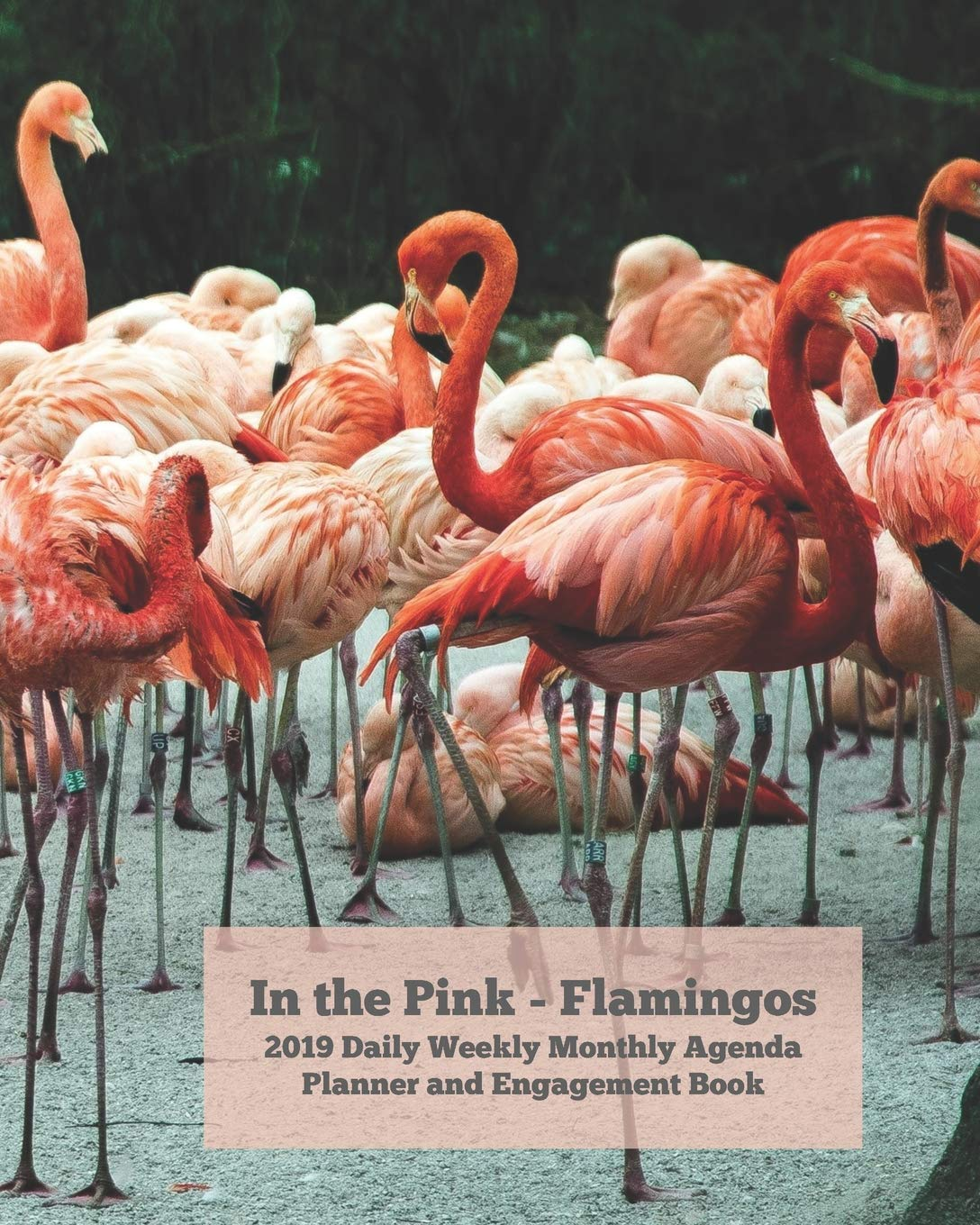 In the Pink - Flamingos 2019 Daily Weekly Monthly Agenda ...