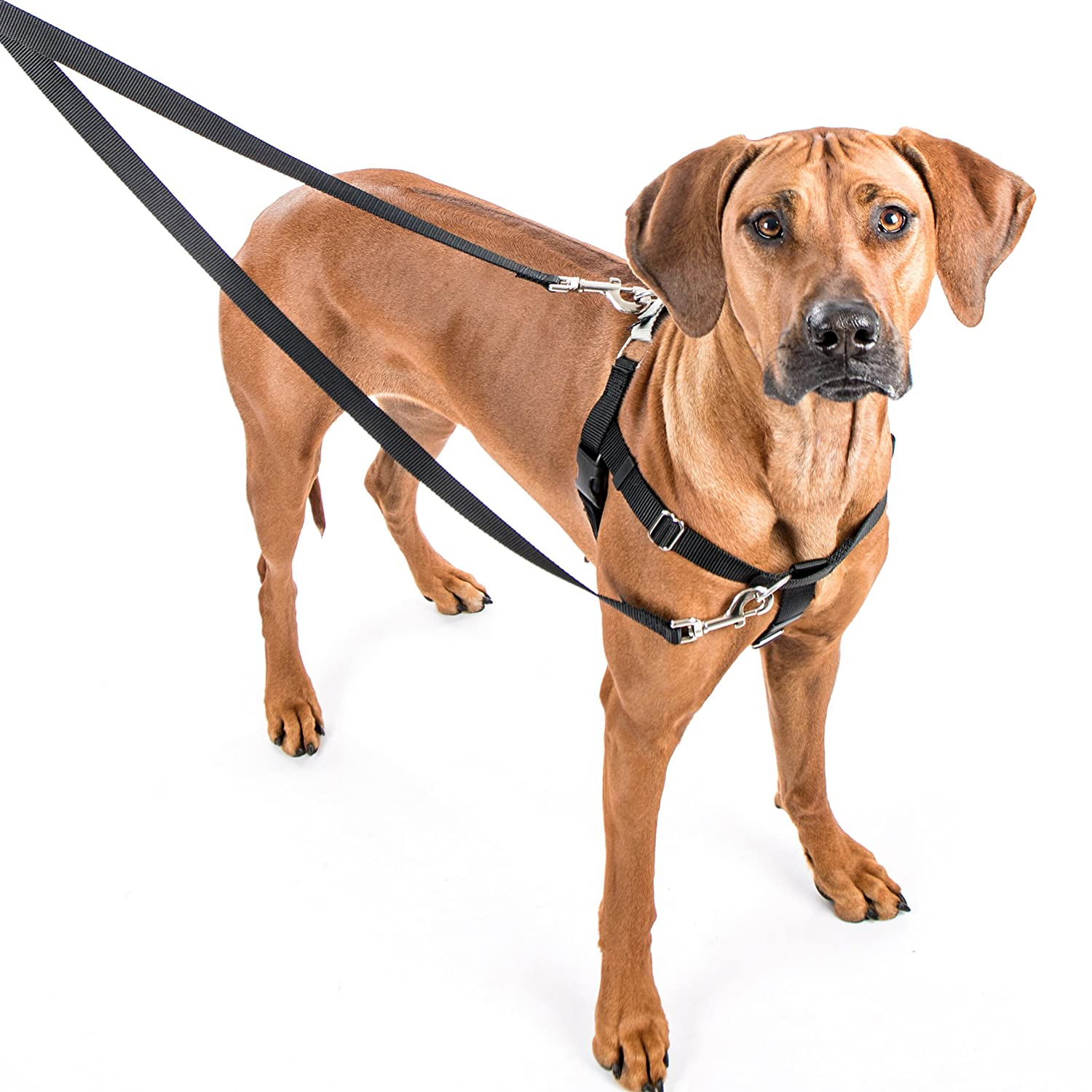 Black XXLarge (1Inch Wide)2 Hounds Design Freedom NoPull Harness Only, No Leash, Black, Medium (5 8Inch Wide)