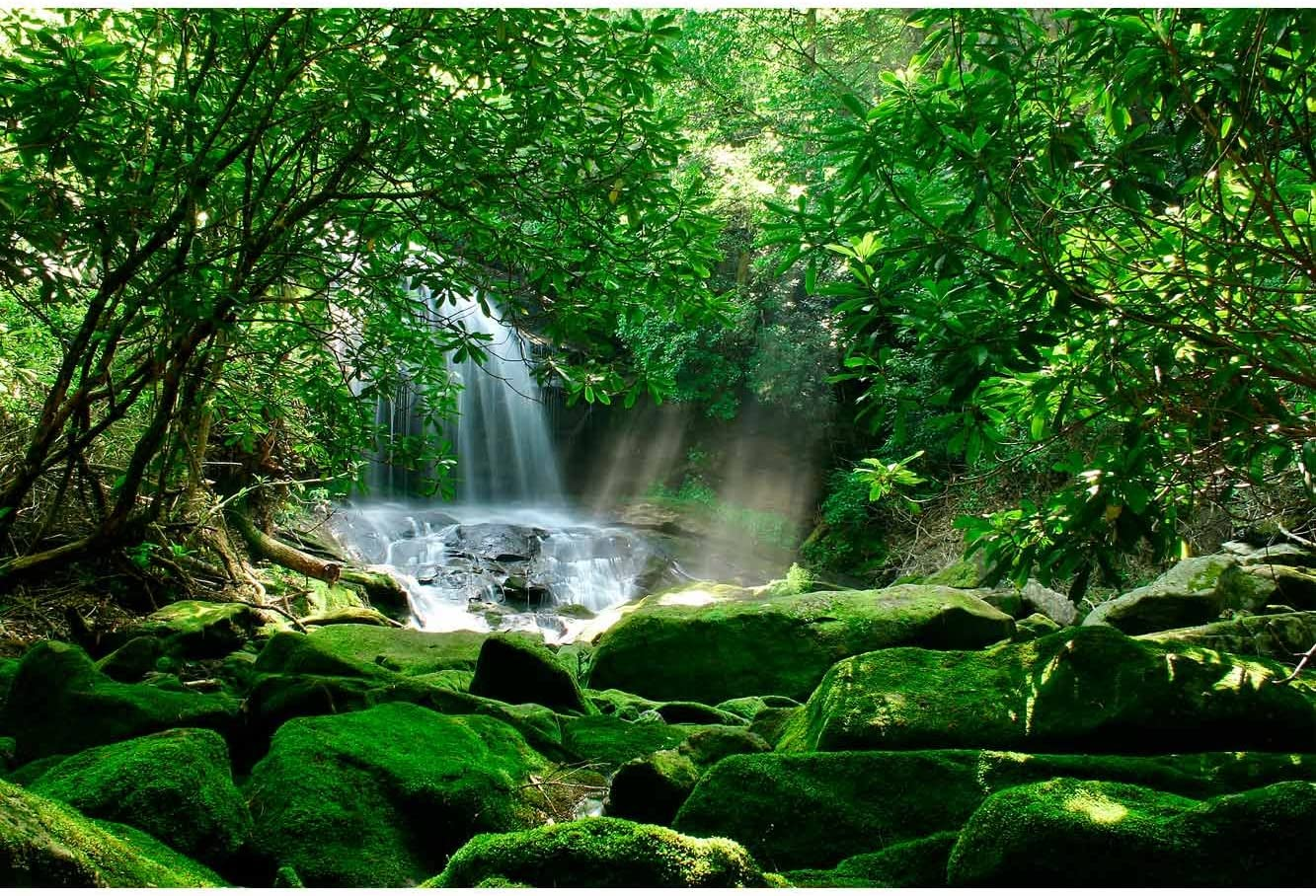 Papel Pintado Pared Cascada Bosque Tropical Mural Habitaciones. Papel Pintado Fotomural para Paredes Decoraci/ón comedores Varias Medidas 100 x 70 cm Salones