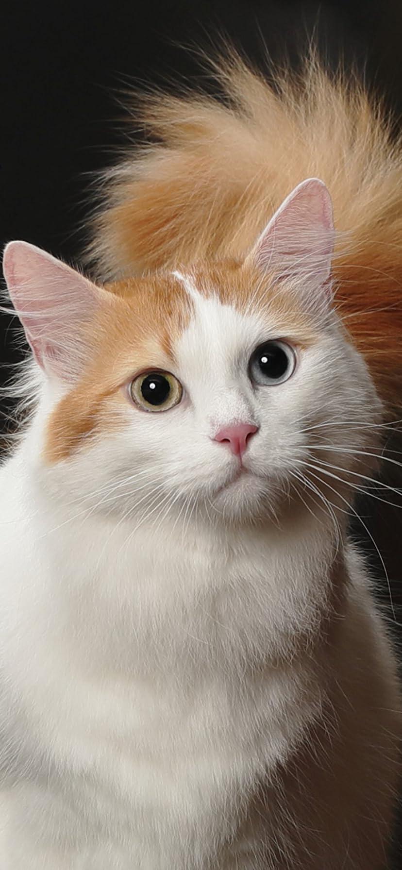 ベスト スマホ 猫 壁紙 1万 お気に入りの壁紙オプション