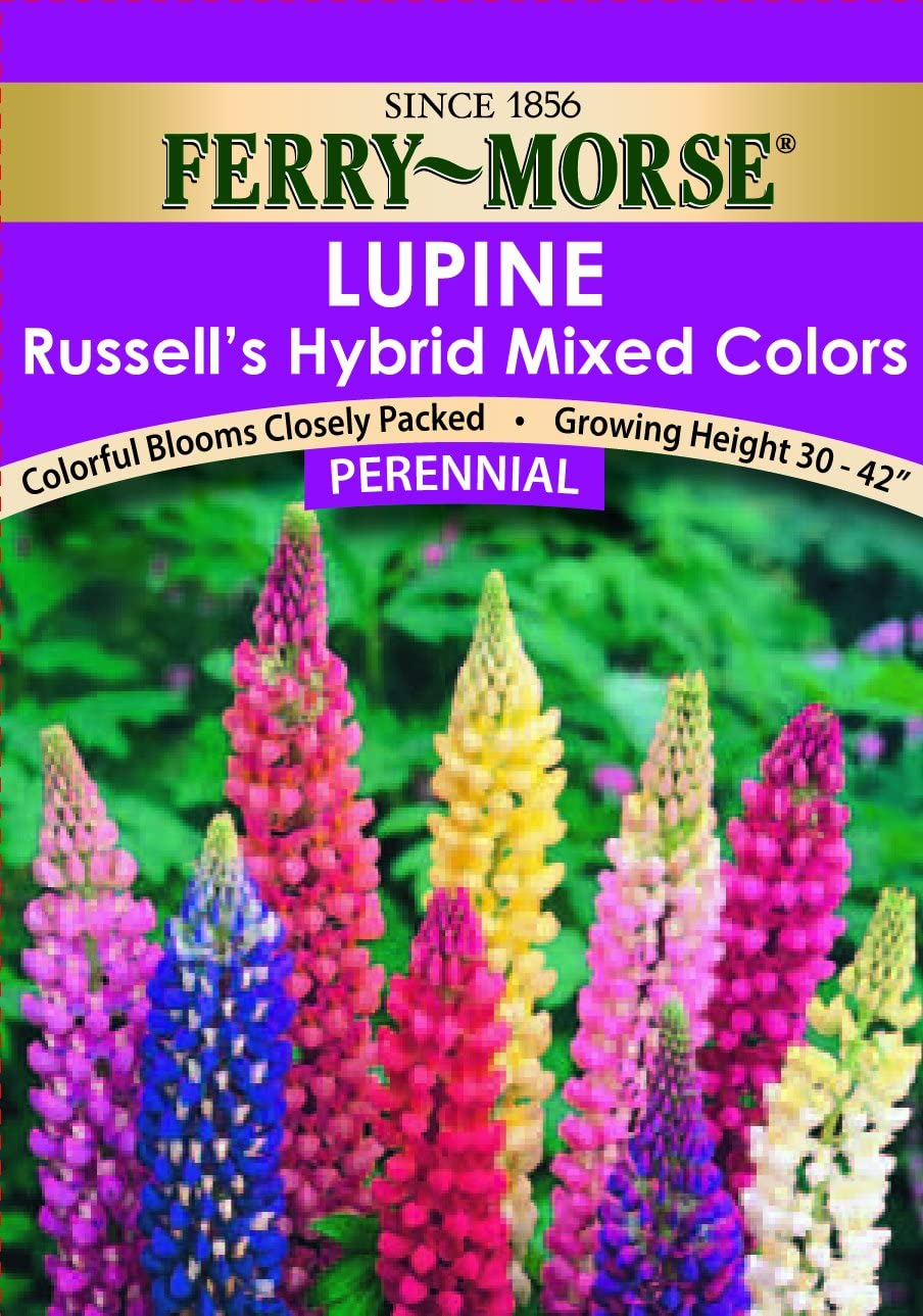 Lupin Russell Hybrids 20 FINEST SEEDS