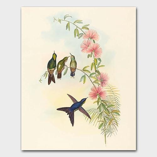 hummingbird print bird art gould artwork home wall decor thornbillquot