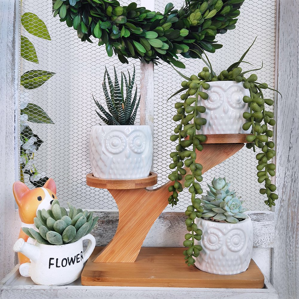3pcs Owl Succulent Pots with 3 Tier Bamboo Saucers Stand Holder - White Modern Decorative Ceramic Flower Planter Plant Pot with Drainage - Home Office Desk Garden Mini Cactus Pot Indoor Decoration by besttoyhome (Image #4)