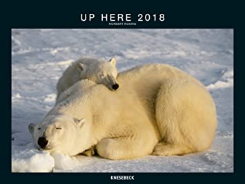 Calendrier Pole.Calendrier 2018 Maxi Calendrier 2018 Animaux Polaire Ours