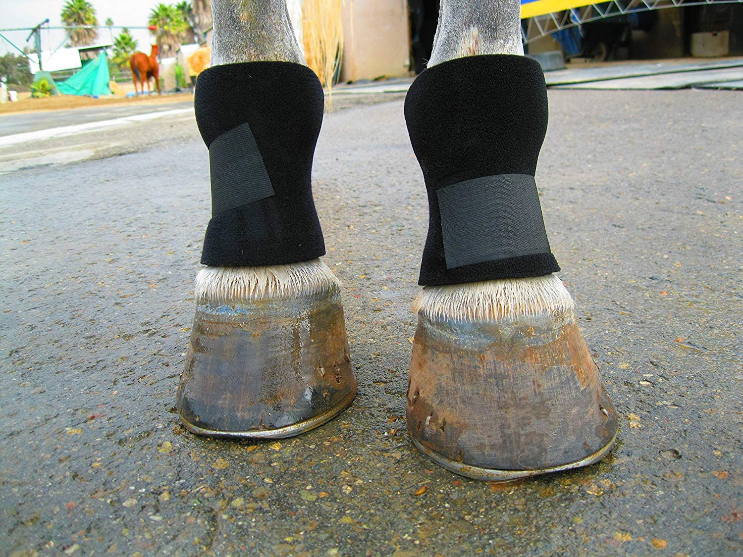 Equipro Bedsore Boots for Horses by Equipro